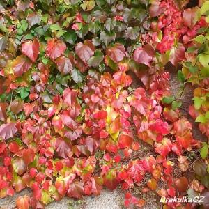 Listí na zdi